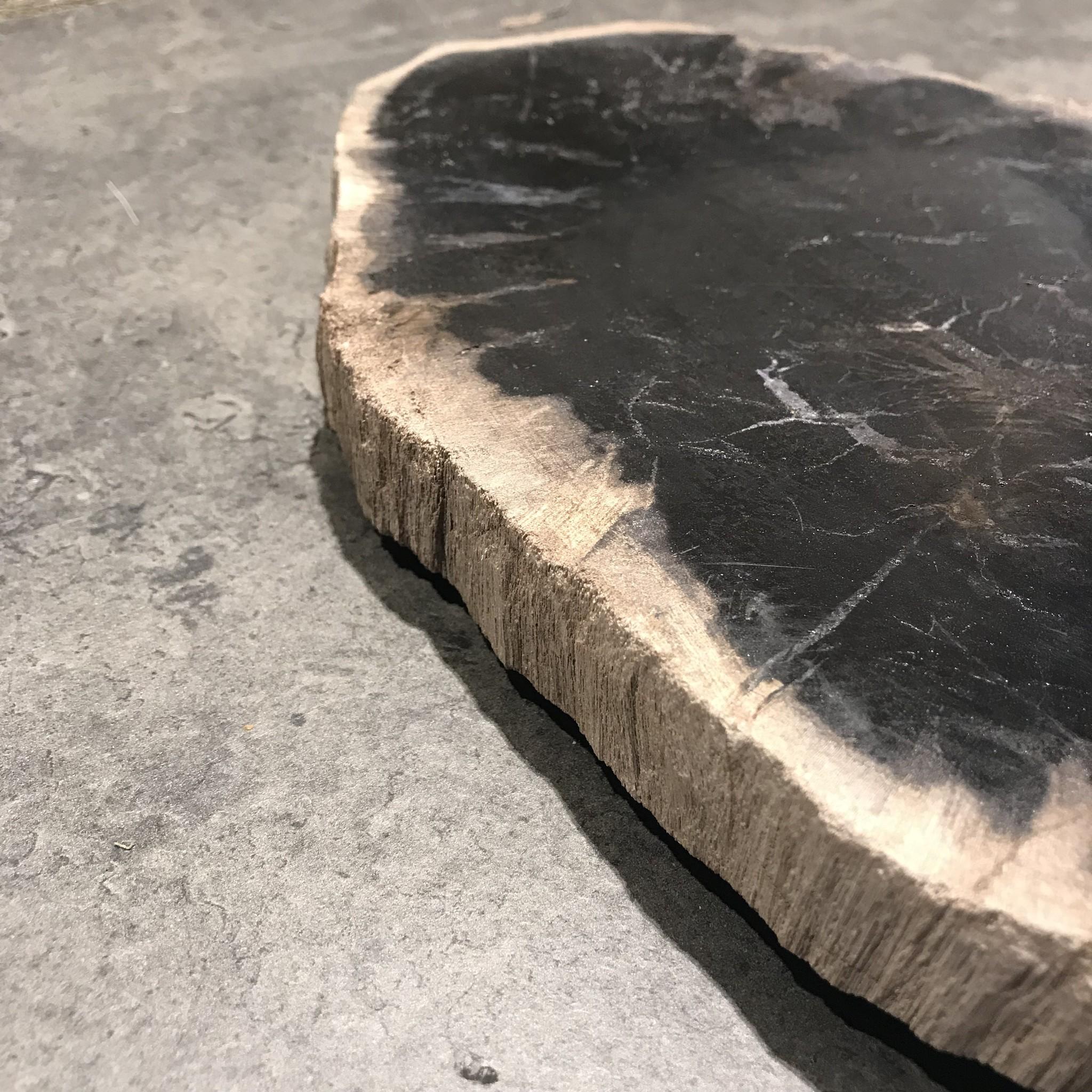 Versteend hout op standaard