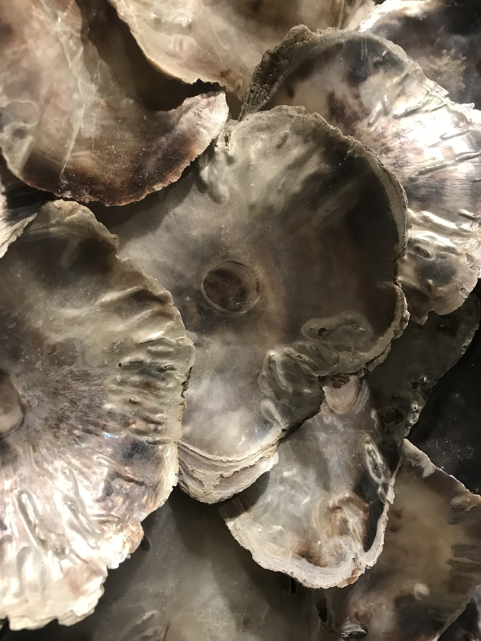 Oesters in lijst