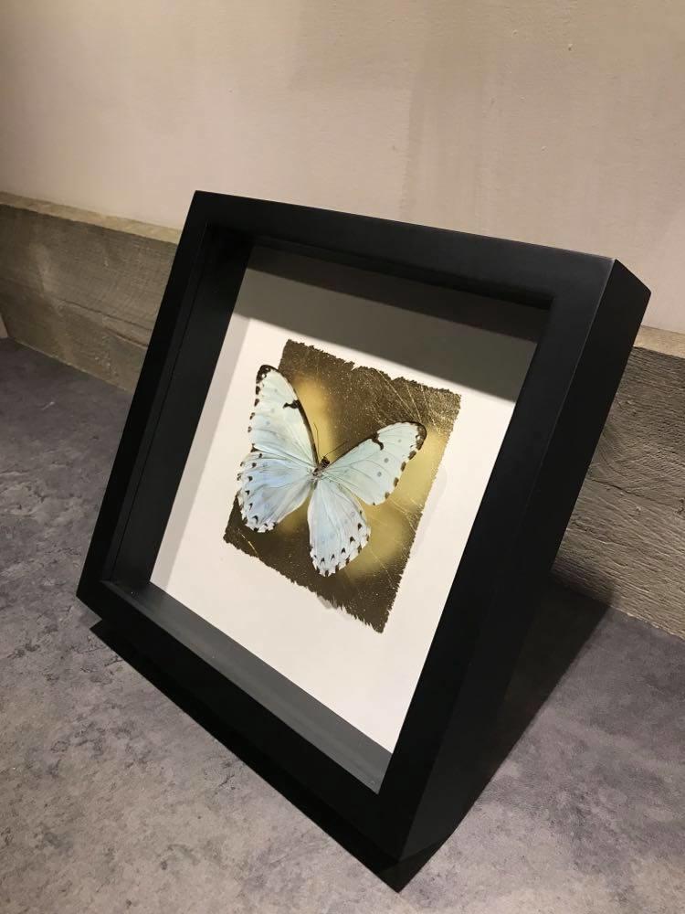 Fotolijst met vlinder