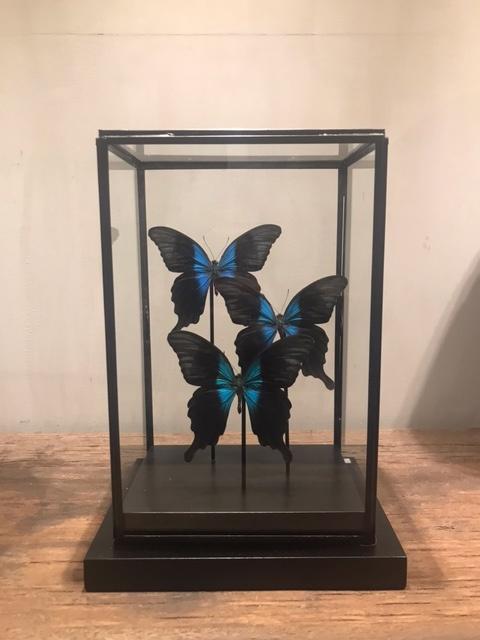 Metalen stolp met vlinder
