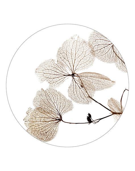 Zoedt Muurcirkel droogbloemen