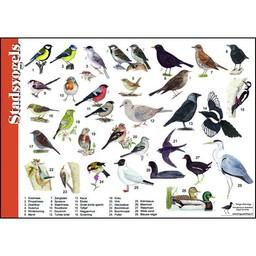 Tringa paintings natuurkaarten Herkenningskaarten Stadsvogels