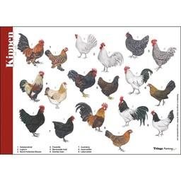 Tringa paintings natuurkaarten Herkenningskaarten Kippen