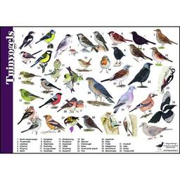Tringa paintings natuurkaarten Herkenningskaarten Tuinvogels