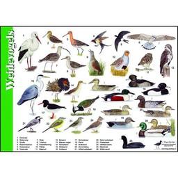 Tringa paintings natuurkaarten Herkenningskaarten Weidevogels