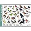 Tringa paintings natuurkaarten Herkenningskaarten Vogels in de winter