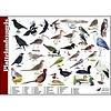 Tringa paintings natuurkaarten Herkenningskaarten Plattelandsvogels
