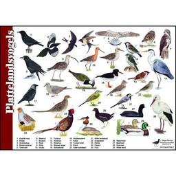 Tringa paintings natuurkaarten Tringa paintings Herkenningskaarten Plattelandsvogels