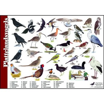 Tringa paintings natuurkaarten Natuur zoekkaart Plattelandsvogels