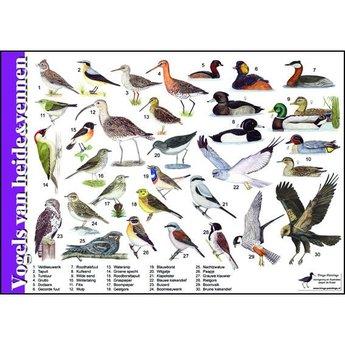 Tringa paintings natuurkaarten Natuur zoekkaart Vogels van Heide & Vennen