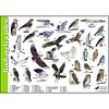 Tringa paintings natuurkaarten Herkenningskaarten Roofvogels en Uilen