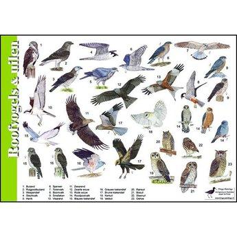 Tringa paintings natuurkaarten Natuur zoekkaarten Roofvogels en Uilen