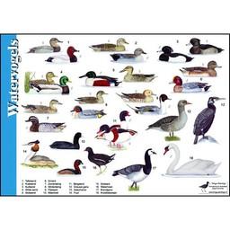 Tringa paintings natuurkaarten Tringa paintings Herkenningskaarten Watervogels