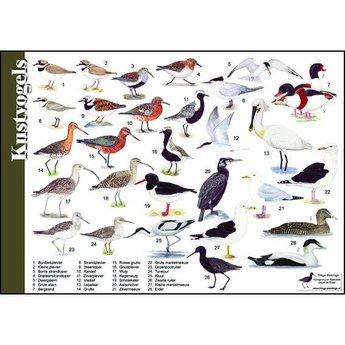 Tringa paintings natuurkaarten Natuur zoekkaarten Kustvogels