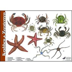 Tringa paintings natuurkaarten Tringa paintings Herkenningskaarten Krabben en Zeesterren