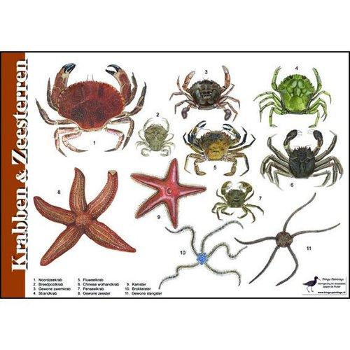 Tringa paintings natuurkaarten Natuur zoekkaarten Krabben en Zeesterren