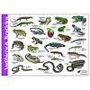 Tringa paintings natuurkaarten Herkenningskaarten Amfibiën en reptielen