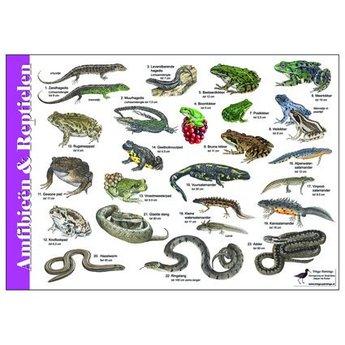 Tringa paintings natuurkaarten Natuur zoekkaarten Amfibiën en reptielen