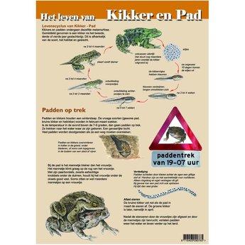 Tringa paintings natuurkaarten Natuur zoekkaarten Het leven van Kikker en Pad