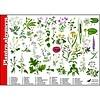 Tringa paintings natuurkaarten Herkenningskaarten Planten algemeen