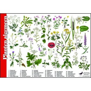 Tringa paintings natuurkaarten Tringa paintings Herkenningskaarten Planten algemeen