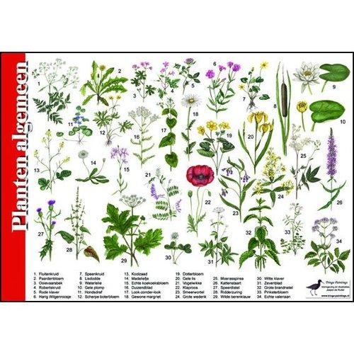 Tringa paintings natuurkaarten Natuur zoekkaartenn Planten algemeen