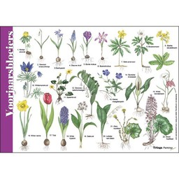 Tringa paintings natuurkaarten Herkenningskaarten Voorjaarsbloeiers