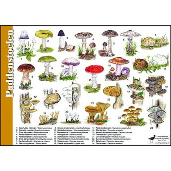 Tringa paintings natuurkaarten Natuur zoekkaarten Paddenstoelen
