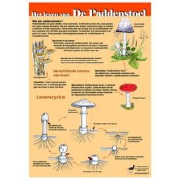 Tringa paintings natuurkaarten Herkenningskaarten Het leven van de paddenstoel