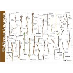 Tringa paintings natuurkaarten Herkenningskaarten Takken en Knoppen