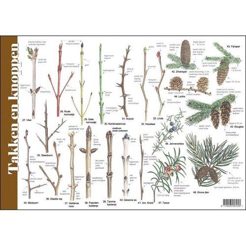 Tringa paintings natuurkaarten Natuur zoekkaarten Takken en Knoppen