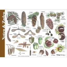 Tringa paintings natuurkaarten Tringa paintings Herkenningskaarten Noten, zaden, vruchten