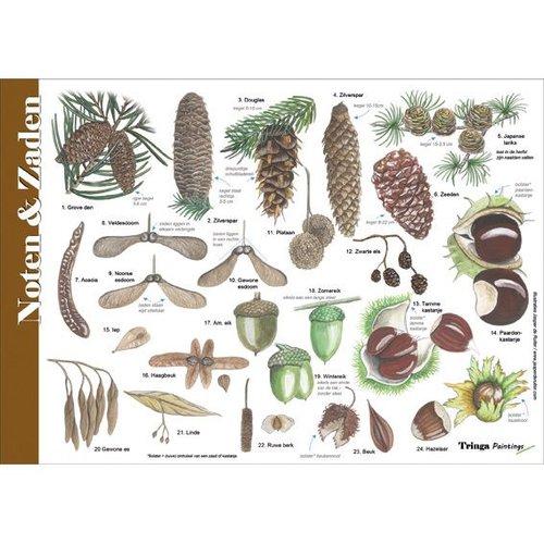 Tringa paintings natuurkaarten Natuur zoekkaarten Noten, zaden, vruchten