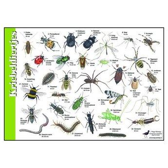Tringa paintings natuurkaarten Natuur zoekkaarten Kriebeldiertjes