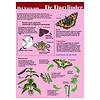 Tringa paintings natuurkaarten Herkenningskaarten het leven van de dagvlinder