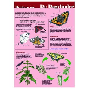 Tringa paintings natuurkaarten Tringa paintings Herkenningskaarten het leven van de dagvlinder