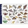 Tringa paintings natuurkaarten Herkenningskaarten Nachtvlinders