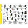 Tringa paintings natuurkaarten Herkenningskaarten Wilde Bijen