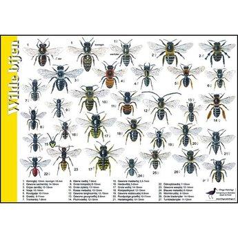 Tringa paintings natuurkaarten Natuur zoekkaarten Wilde bijen