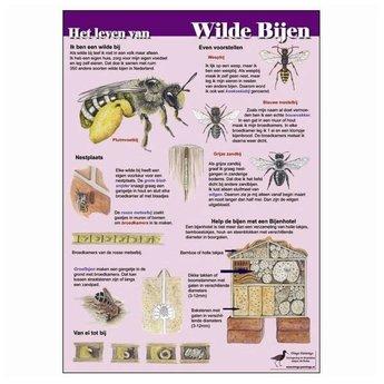 Tringa paintings natuurkaarten Natuur zoekkaarten Het leven van wilde bijen