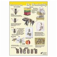 Tringa paintings Herkenningskaarten Het leven van de Honingbij