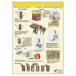 Tringa paintings natuurkaarten Tringa paintings Herkenningskaarten Het leven van de Honingbij