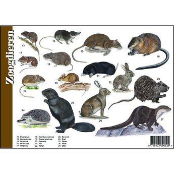 Tringa paintings natuurkaarten Natuur zoekkaarten Zoogdieren