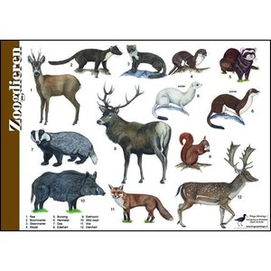 Tringa paintings natuurkaarten Tringa paintings Herkenningskaarten Zoogdieren