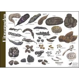 Tringa paintings natuurkaarten Herkenningskaarten Poepkaart