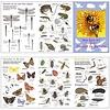 Tringa paintings natuurkaarten Zoekkaart Dieren in de Tuin
