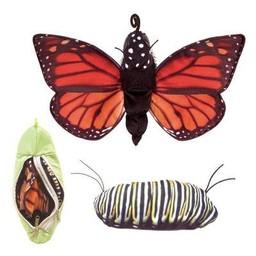Folkmanis handpoppen en poppenkastpoppen Handpop vlinder lifecycle