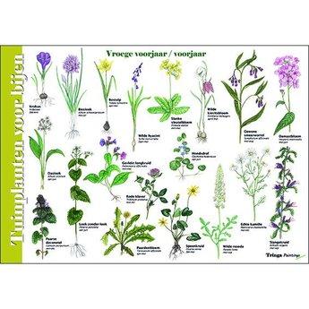 Tringa paintings natuurkaarten Herkenningskaart Tuinplanten voor bijen