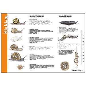 Tringa paintings natuurkaarten Herkenningskaart Slakken