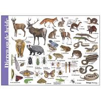 Herkenningskaart Dieren op de heide